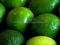 High Quality Fresh Green Bulk Lime/ Fresh Lemon for Middle East - HKVIMEX