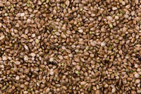 Organic Agricultural Hemp Oil Seeds for sale