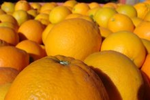New Crop Fresh Navel Orange