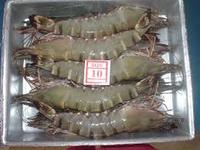 Cooked Black Tiger Shrimps(CPTO)