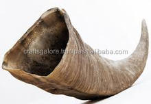 Raw Buffalo horn 10cm to 80cms Long for sale