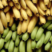 main product of Vietnam farm products High quality for sale bunches of fresh green banana
