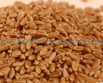 New crop wheat milling, feed, durum Cracked wheat from Ukraine