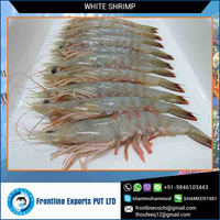 Best Quality Frozen White Shrimp Whole Round Supplier from India