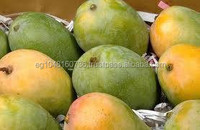 Egypt fresh mango with sweet taste and safe quality