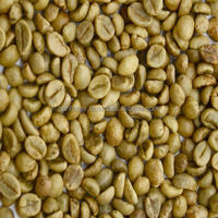 ROBUSTA GREEN COFFEE BEANS BEST PRICE BEST QUALITY WHOLESALE