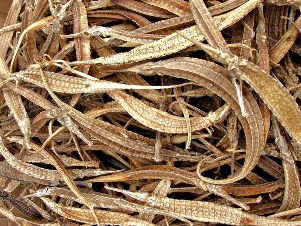 Dried Sea Dragon Fish (Dried Pipefish)