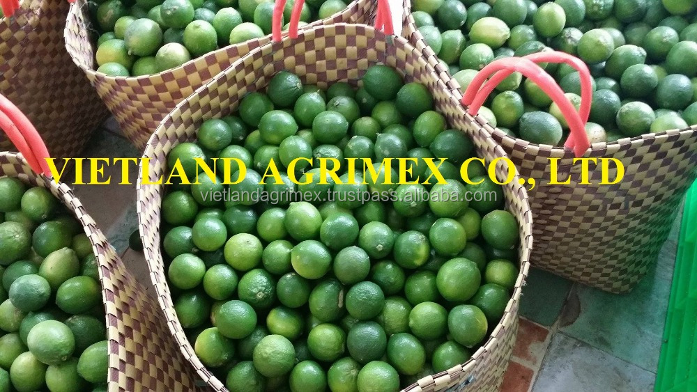 VIETNMAESE Fresh Green Lime / Lemon / Green Lemon IN NEW HARVEST