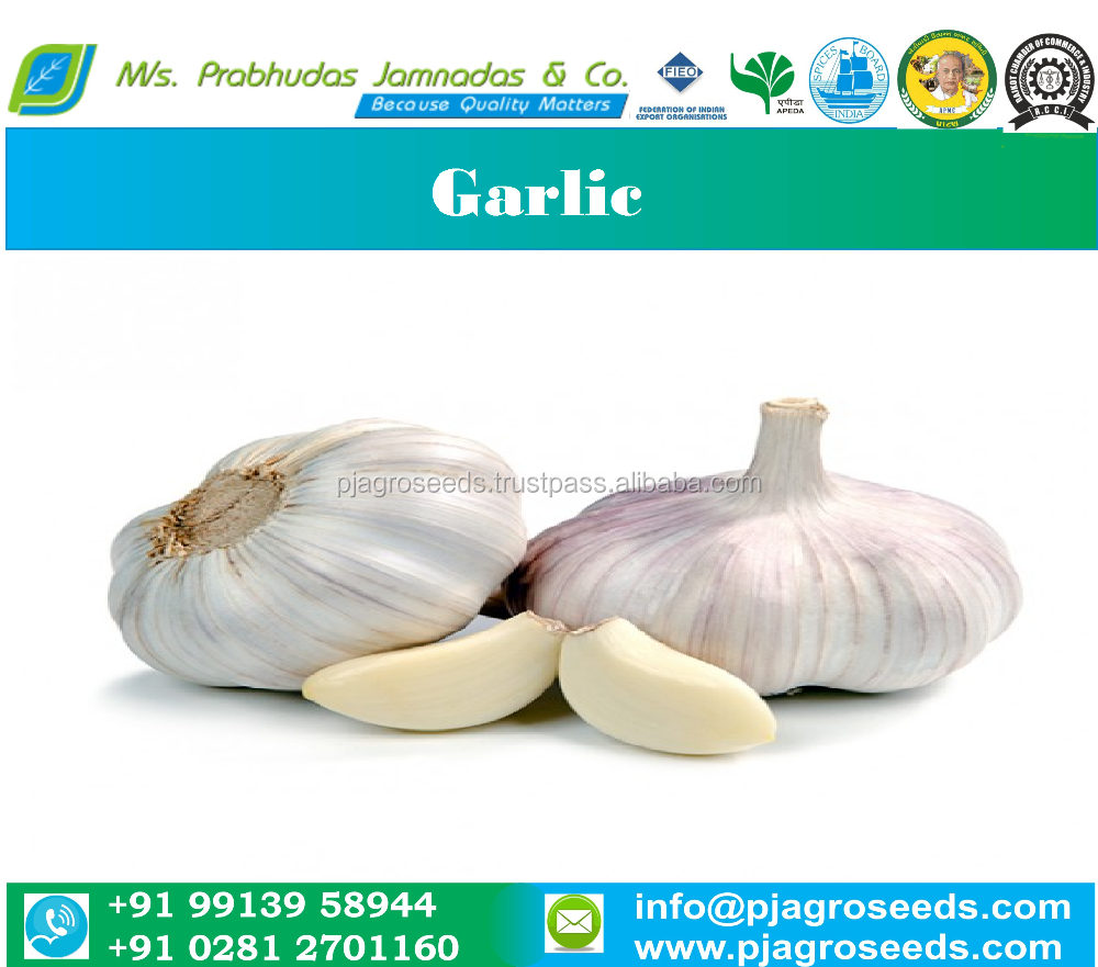 Natural Indian Garlic
