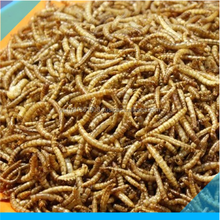 Wholesale dried mealworm of bird food