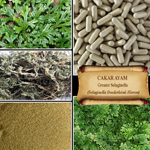 [ORGANIC] GREATER SELAGINELLA / Selaginella Doederleinii Hieron/ CAKAR AYAM / Fresh Powder, Extract, Capsules, Liquid, Oil