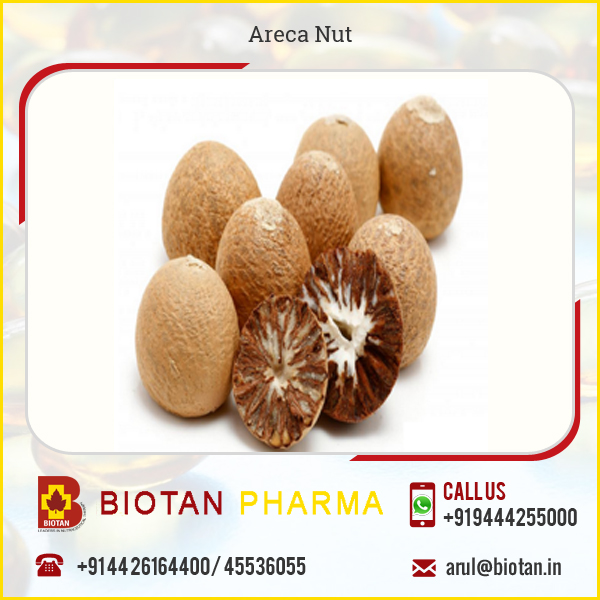 HACCP Certified Food Grade Dried Areca Nut - Betel Nut