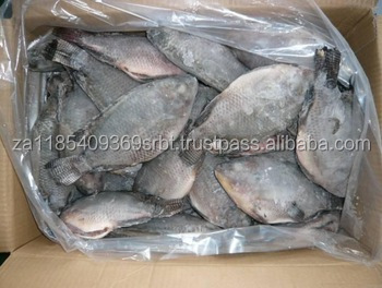 Frozen Black Tilapia Fish WR Farm Raised