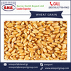 Organic and Fresh Wheat for Sale at Competitive Price