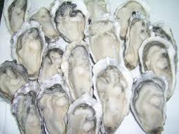 Superior Quality Individual Quick Frozen Oyster Meat for Food Additives