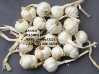 FRESH GARLIC / VIETNAM GARLIC