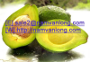 FRESH AVOCADO at HIGH QUALITY and THE MOST COMPETITIVE PRICE.