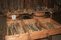 Quality Grade A Dried StockFish for sale / Frozen Stock Fish
