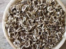 High Quality Moringa Seeds /Moringa Oleifera Seeds / Organic Moringa Seeds