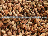Cocoa Beans Organic