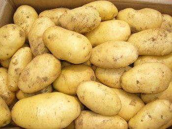 best holland fresh potato