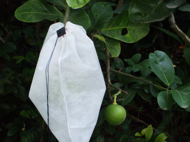 non woven fabric FRUIT PROTECT BAG
