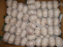 Fresh Normal White Garlic / Fresh Thailand Garlic / Big Size Garlic