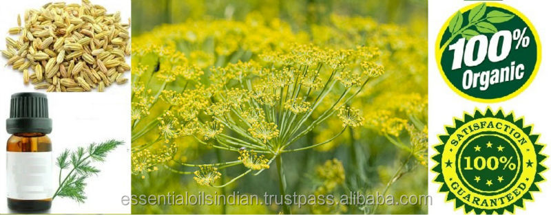 Fennel Oil Latin name Foeniculum vulgare M.