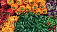 fresh red,yellow,red capsicum/bell pepper