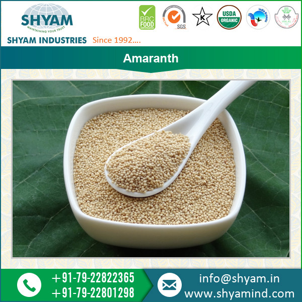 NON GMO Amaranth Seeds by Shyam Industries, A Star Export House recognised by Government of India