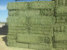 Cheap high quality Animal feed Alfalfa Meal / Alfalfa Hay for sale/Timothy Hay for sale