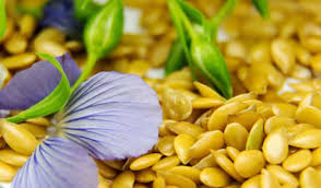 Yellow Flax Seeds Canada