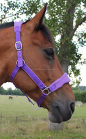 Horse cob Pony Fleece padded Halters choice of colours