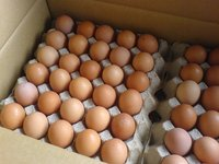 Fresh Poultry Farm Table Eggs Available
