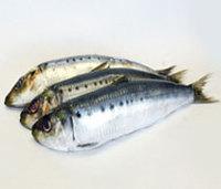 Qulaity Frozen Sardine Fish 80-100 Frozen Seafood Exporters