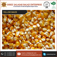 9% Protein and Rich Dietary Fiber Yellow Maize for Fast Foods at Reasonable Rate