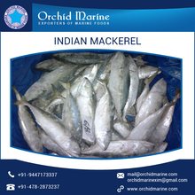 Cylindrical Shaped and Slim Fresh & Frozen Indian Mackerel at Wholesale Price