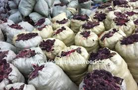 PREMIUM QUALITY_DRIED GRACILARIA RAW/POWDER-SEAWEED_HOT SELL