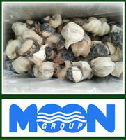 CONCH MEAT FOR SALE FROM MEXICO