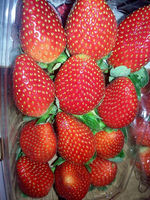 hot sale fresh Strawberry