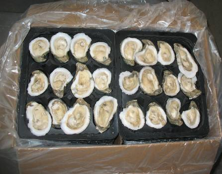 Oysters,scallops,mussels FOR SALE