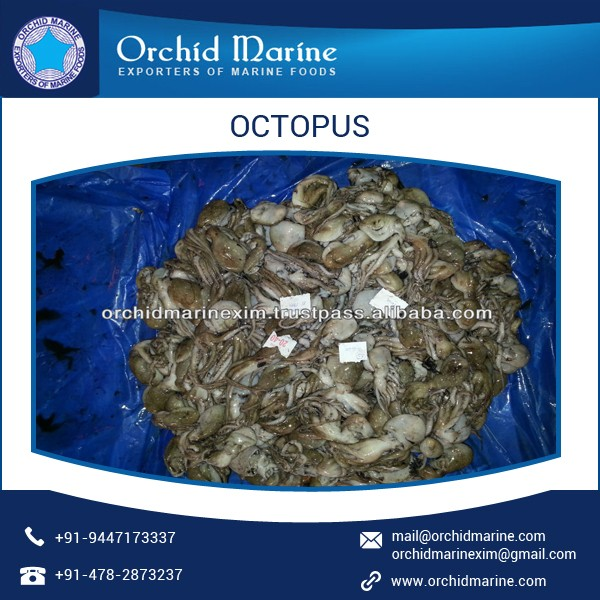 High Quality Frozen/ Fresh/ Delicious Octopus for Food Dishes