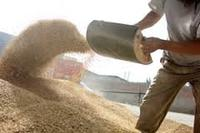 Corn Meal Animal feed- Ready For Sell Worldwide at very cheap prices