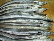 frozen tuna fish price of skipjack tuna