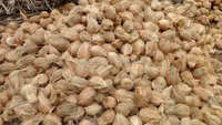 2016 Best Price Husked Coconut from south india