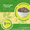 Indian Moringa Seeds for Extraction