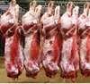 QUALITY HALAL FRESH / FROZEN GOAT / LAMB / SHEEP MEAT / CARCASS