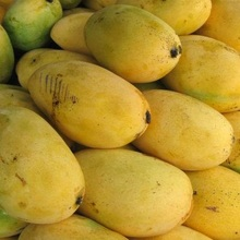 wholesale best quality Fresh mangoes for sale at good price