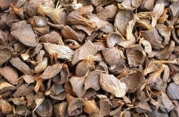 Good Quality Palm Kernel Shell for sale