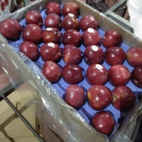 Fresh Red Delicious Pome Fruit Apple Premium Apple pome fruit